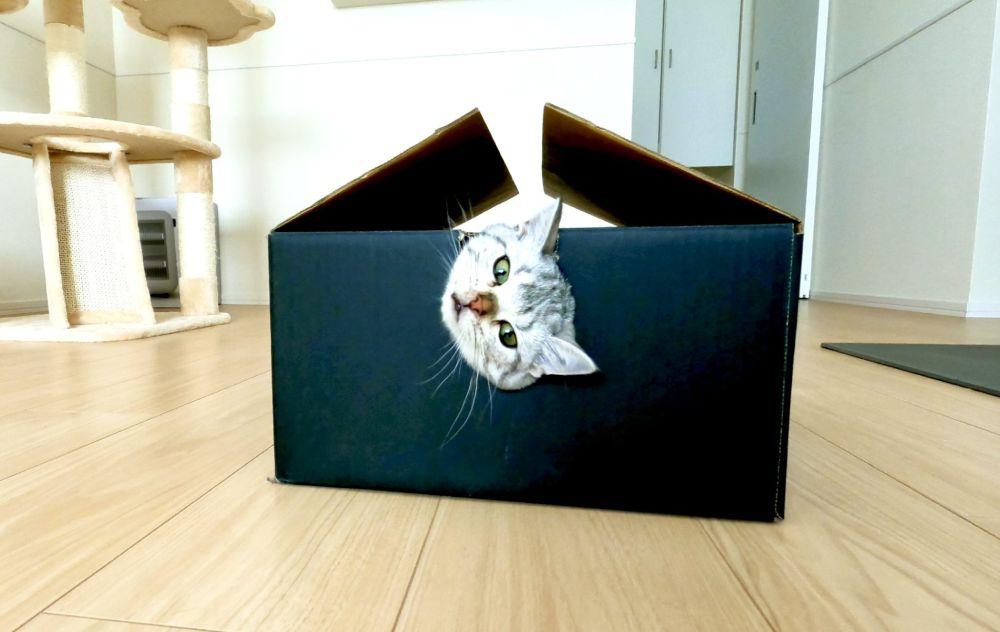 「何やってるの……?」 飼い主戸惑うイリュージョン猫