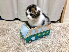 「お届けモノでーす」呼び鈴とともに現れた猫配達員の姿に癒される方が続出。