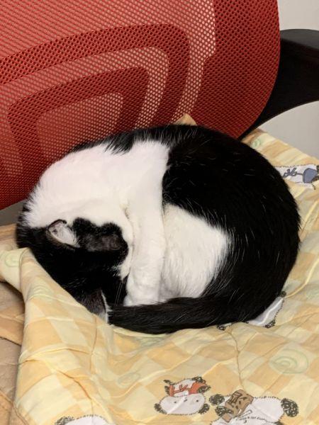 場所を移した後は照明の灯で「まぶしい寝」となった福ちゃん。