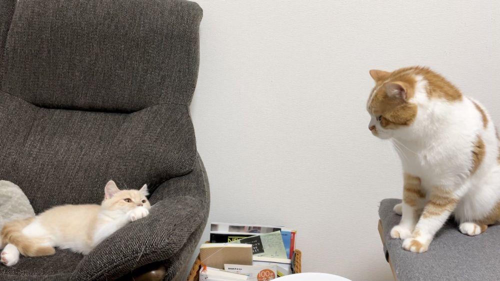 夫婦でみろくんとたもくんの2匹の猫を飼われている飼い主。