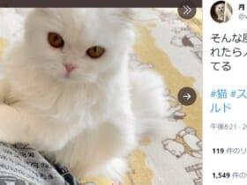 おねだりポーズをする子猫の姿がTwitterで話題。