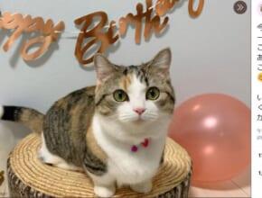 「誕生日」を迎えた猫ちゃんの投稿がTwitterで反響。