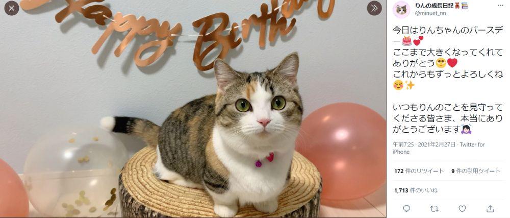 ハッピーバースデー! 初めての「誕生日」を迎えた猫ちゃん