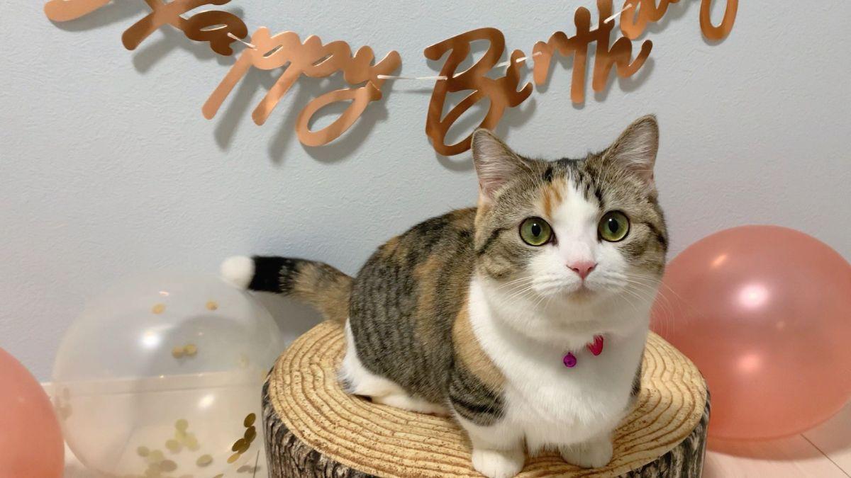 2021年2月27日は飼い主宅に迎え入れられて1年。りんちゃんは「誕生日」を迎えました。