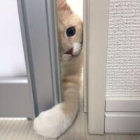 「いらっしゃいませ~」猫店主の手招きに来訪者が続出