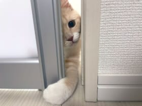 「いらっしゃいませ~」手招きをする子猫の姿がTwitterで話題に。