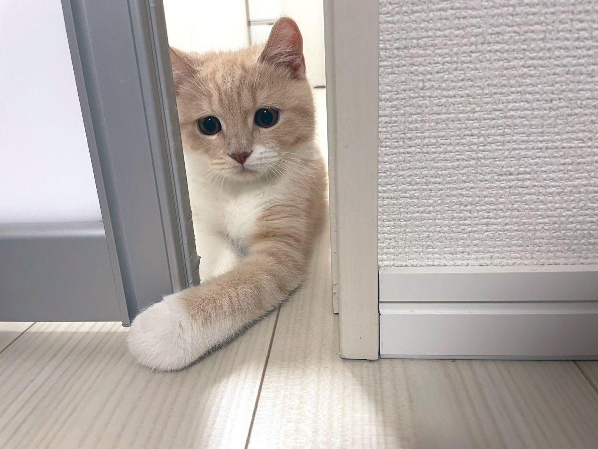 ガラガラと扉を開けるたもくん。