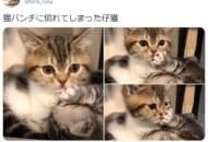 姉からの猫パンチに微動だにしない妹猫の姿がTwitterで話題。