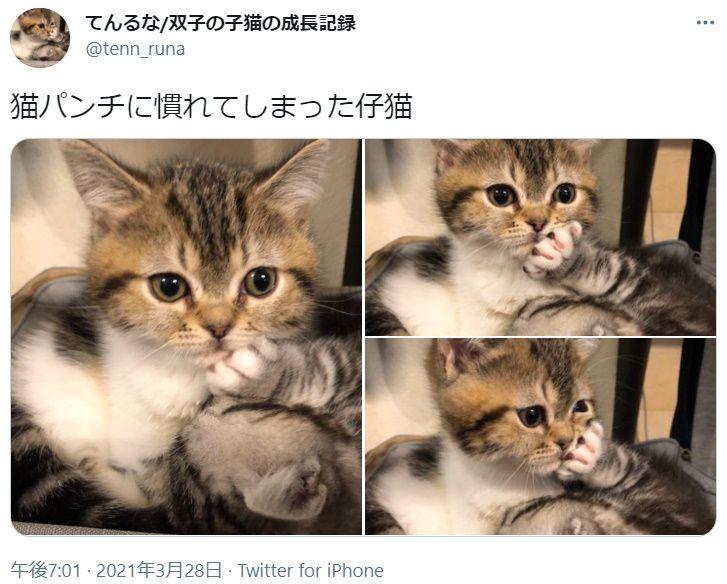 効かないニャ 姉の猫パンチに無反応な妹猫