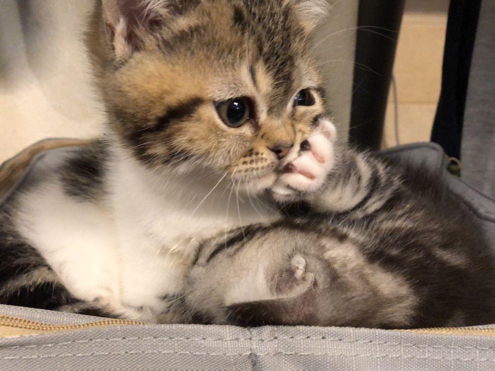 頬がグニャリとなるほどのるなちゃんの猫パンチにもてんちゃんは微動だにしません。
