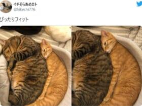 画像提供:イチそらあめロトさん(@kikechi776)