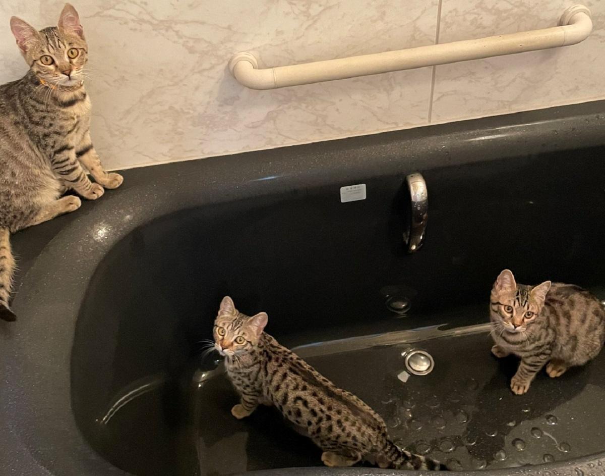 バスジャックが発生!?犯人は3匹の猫