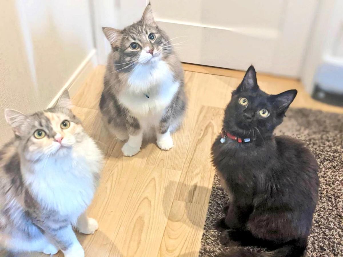 左からマカロニさん、シルバくん、オレガノくん(猫クラシックさん提供)