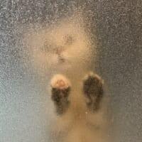 可愛い?怖い? すりガラス越しに見える猫の姿に賛否