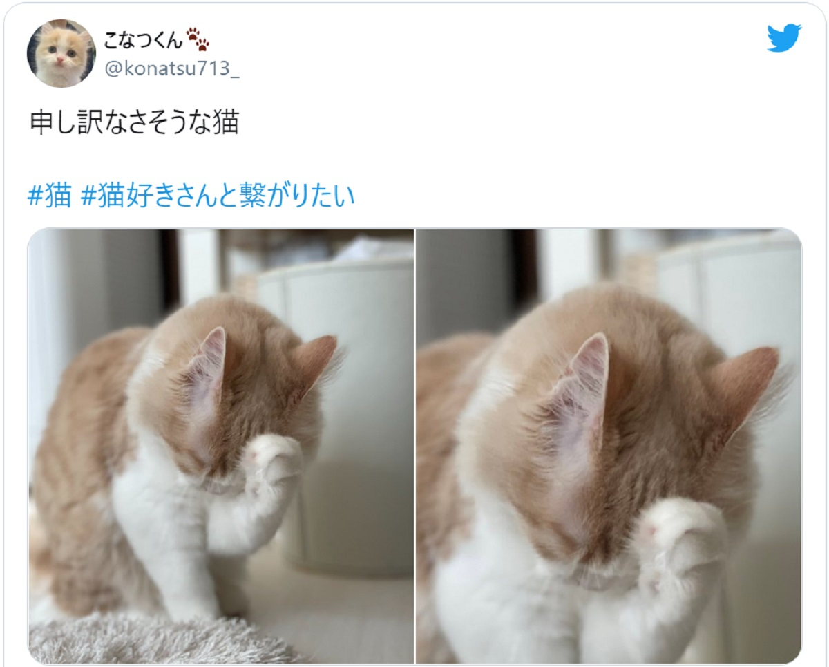 「どうも、すみません」 申し訳なさそうにしている猫