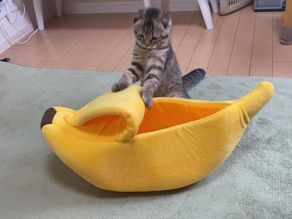 バナナの皮をむく猫?癒やされる人が続出