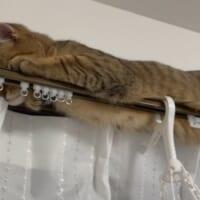 バレバレなんですが……隠れているつもりの猫が可愛…