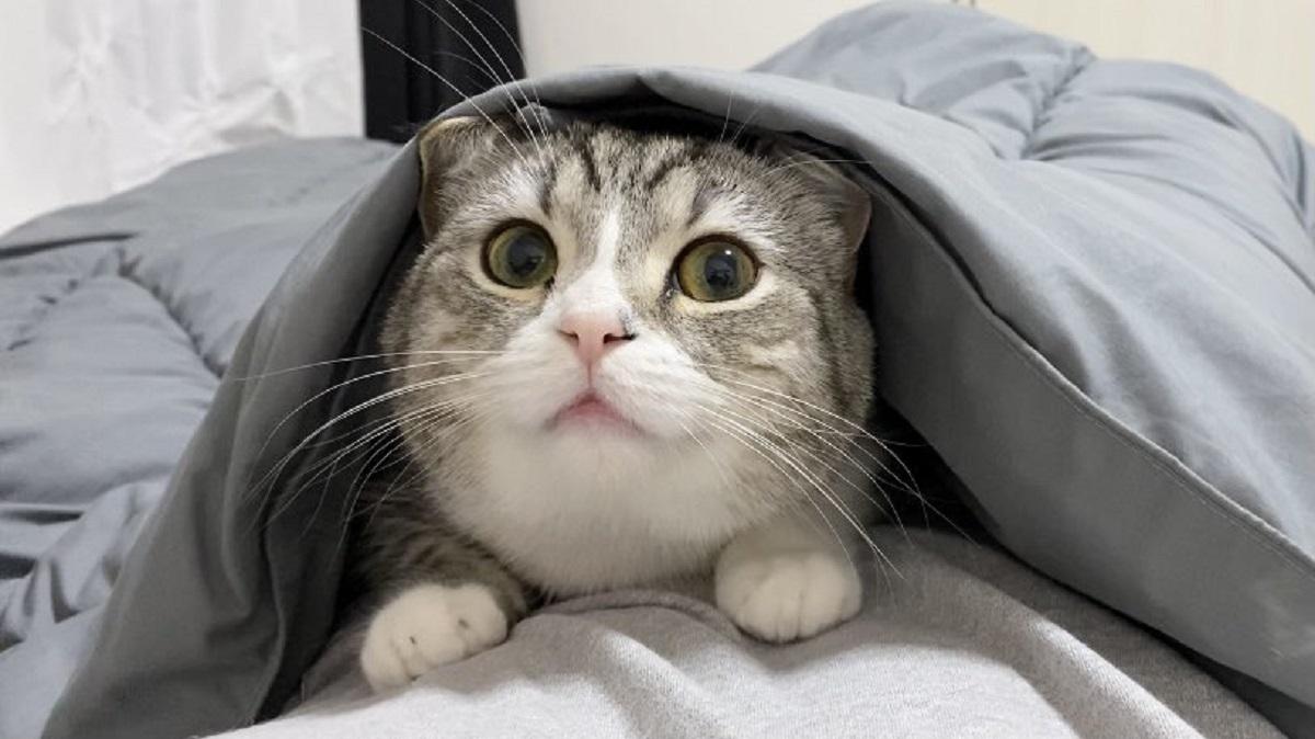 寒い夜は……ホッカイロよりも飼い主のお腹の上を選んだ猫