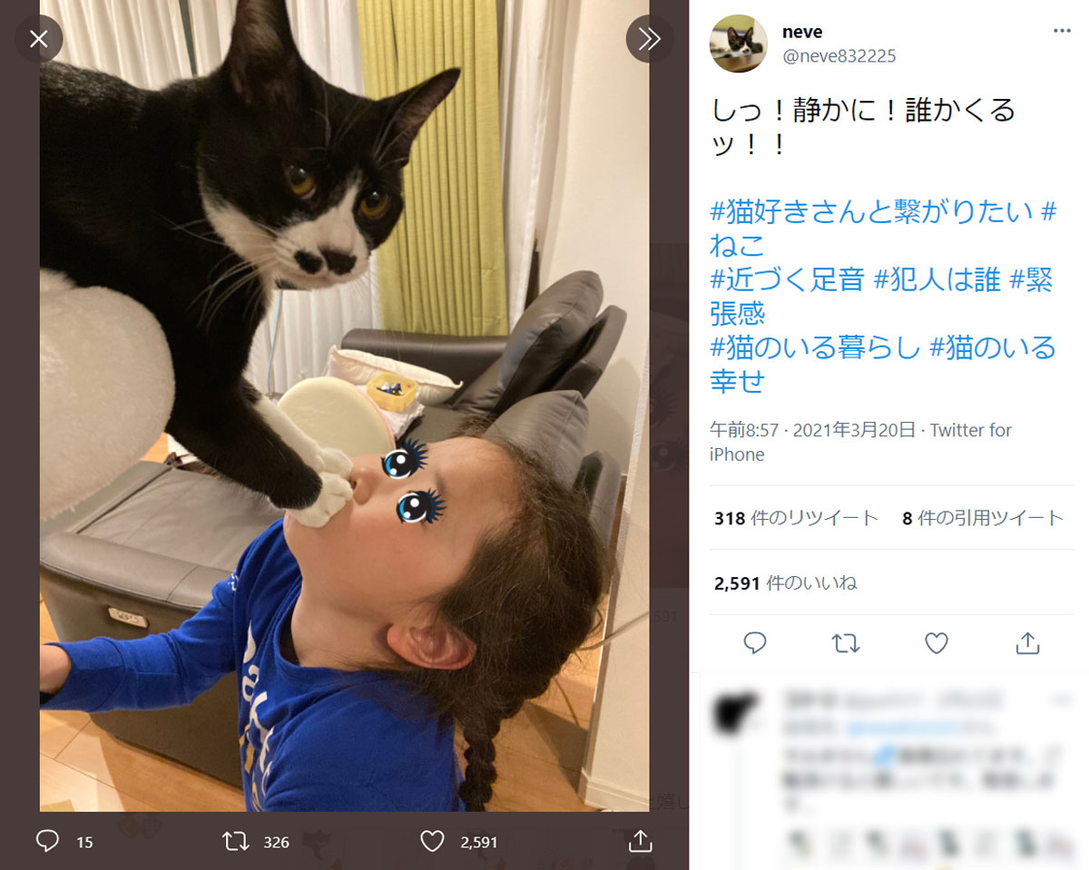 迫真の演技! 猫と女の子がドラマあるあるのシーンを再現?