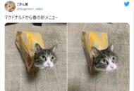 画像提供:こぎん君さん(@koginkun_neko)