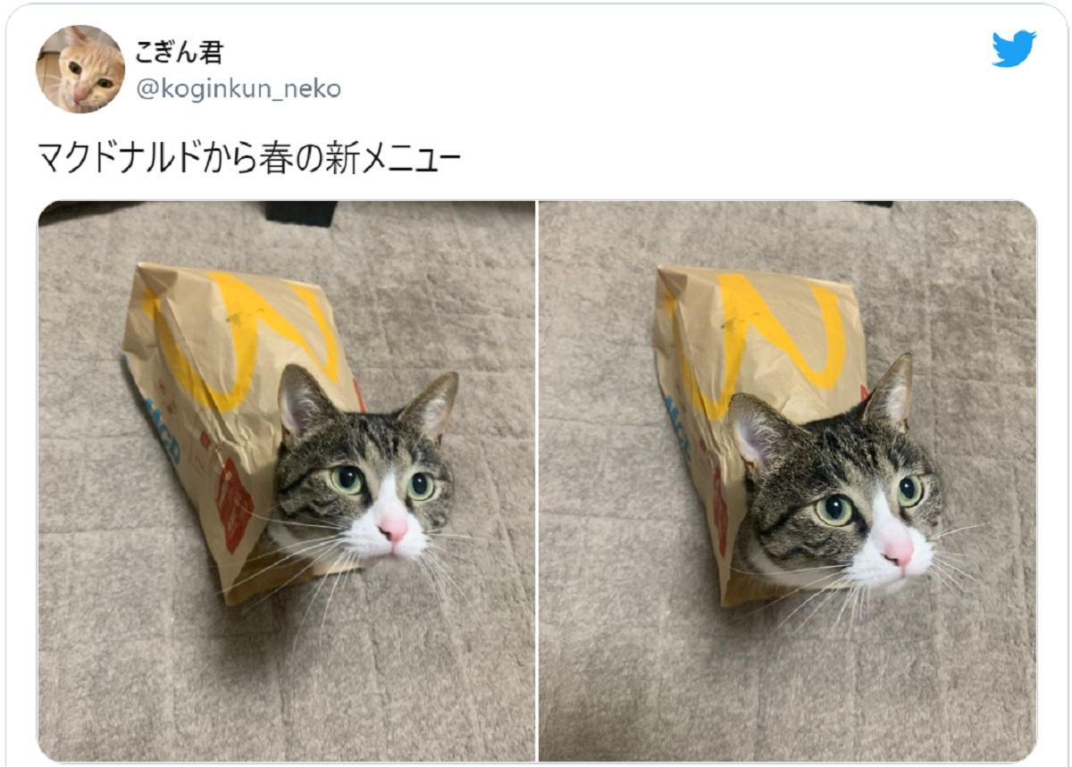 マクドニャルド?マックの紙袋と一体化しちゃった猫さん