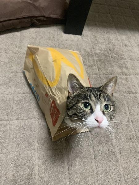 マクドナルドの紙袋に入った、のあちゃん