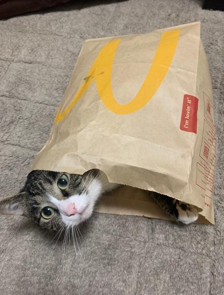 のあちゃんは袋が非常に好き