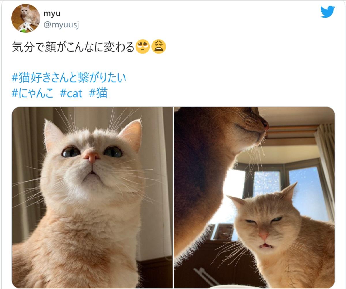 気分で顔がこんなに変わる 露骨に嫌な顔をする猫