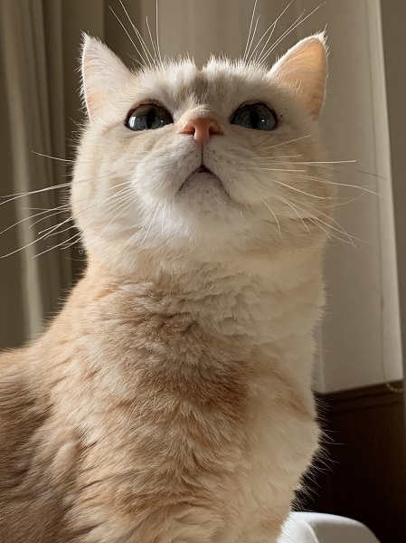 可愛い顔で上の方を見つめている、れいるちゃん