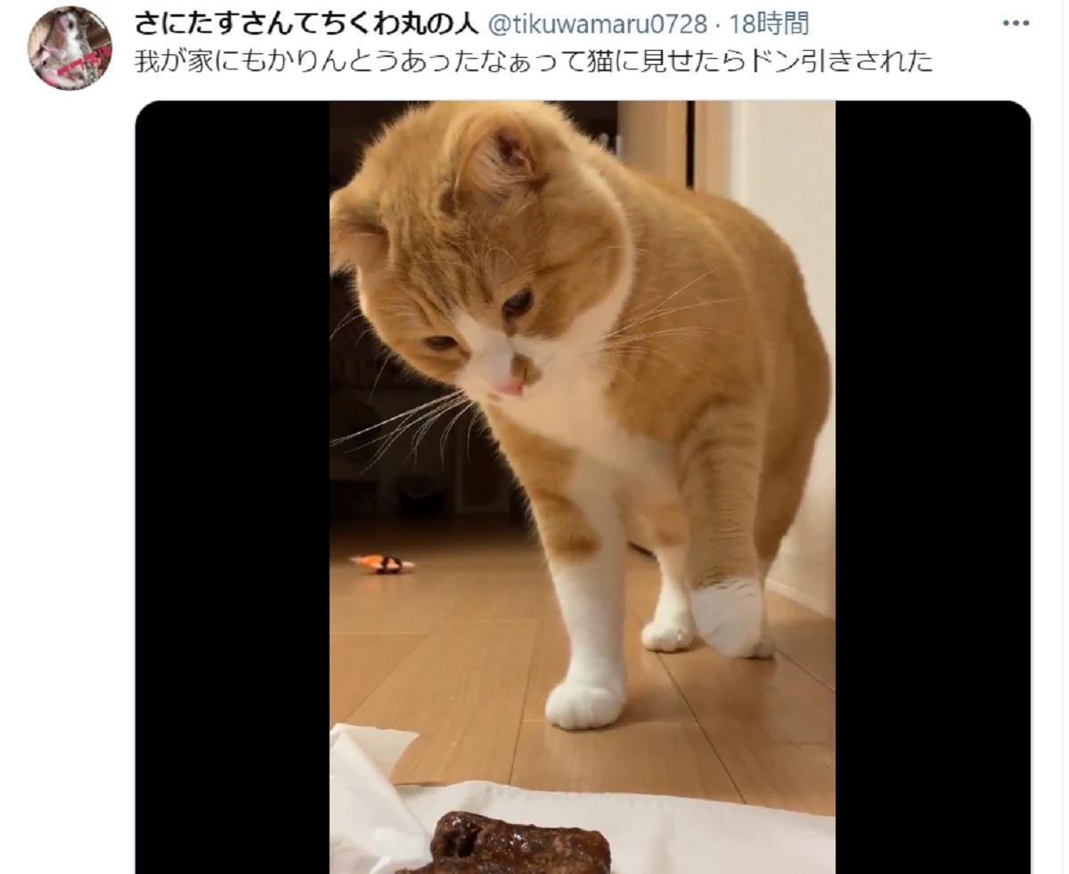 「え……」 かりんとうにドン引きする猫