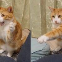 打つべし!打つべし! 猫ボクサーの繰り出す華麗な…