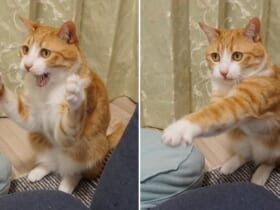 Twitter上で華麗なパンチを披露した猫が大反響。