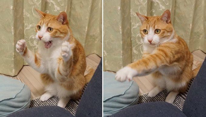 打つべし!打つべし! 猫ボクサーの繰り出す華麗なパンチ