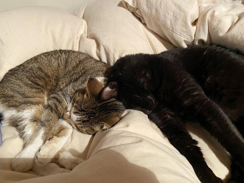 花房さんはひなちゃんとむぎちゃんの2匹の猫と暮らしています。