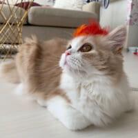 ワイルドなイケメン猫発見 おもちゃが壊れてしょんぼり…から…