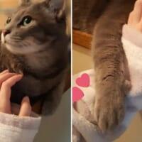 腕を組んでいるみたい 「飼い主LOVE」な猫が見…