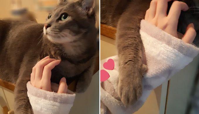 まるで腕を組んでいるかのように、飼い主の手を絡めとる猫の姿がTwitterで話題。