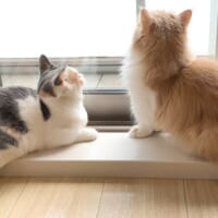 ただいまニャルソック中 窓を警備中の猫隊員
