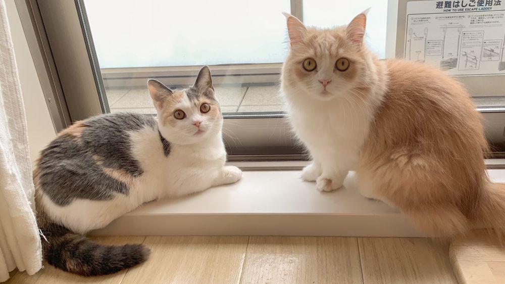 ただいまニャルソック中?猫隊員の様子が激写される。