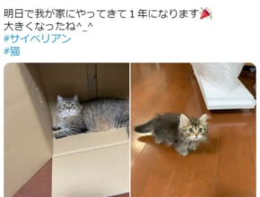 1年を経過した愛猫の姿がTwitterで話題。