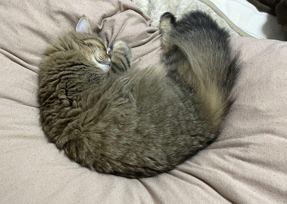 猫だけに?普段は寝子な雷蔵くん。