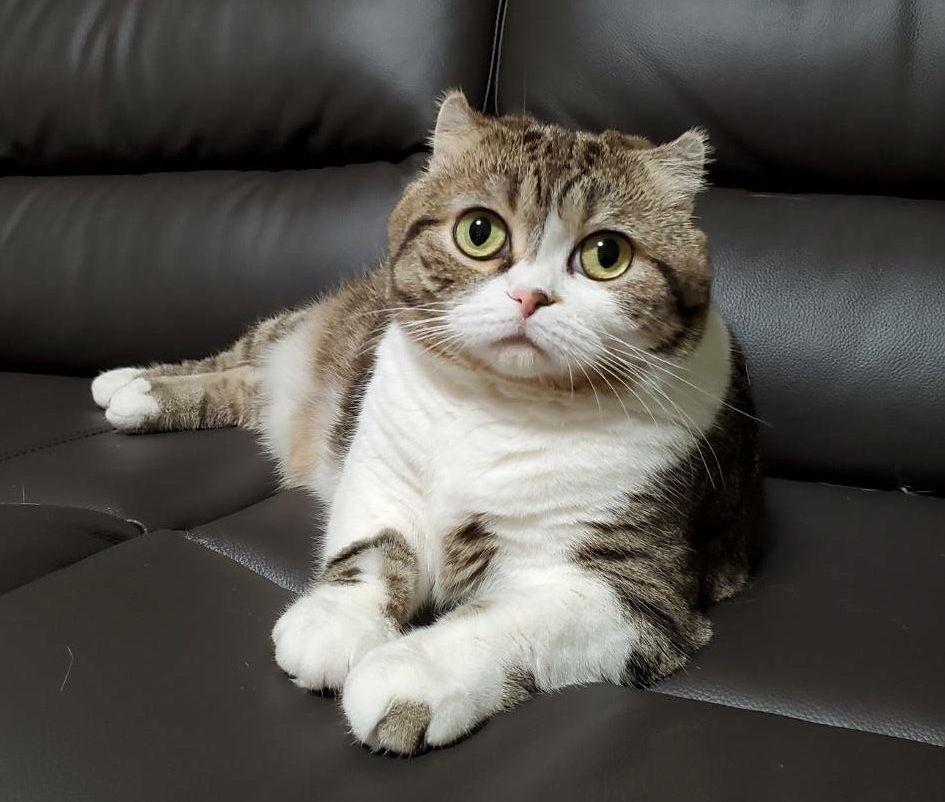 もちくんのママ猫のランちゃん。