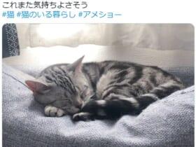 「春眠暁を覚えず」はどうやら猫の世界にもある模様。