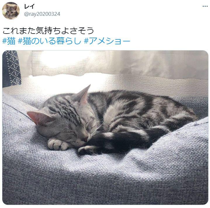 春眠暁を覚えずニャン お気に入りの場所でスヤアっな猫
