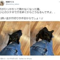飼い主のツナギで爪を研ぐ猫さん 爪がひっかかってしまいガビ…