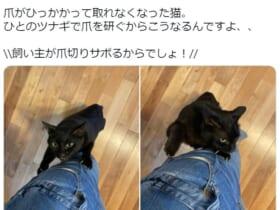 様々な木彫り猫を製作する彫刻家が愛猫との1枚を投稿。