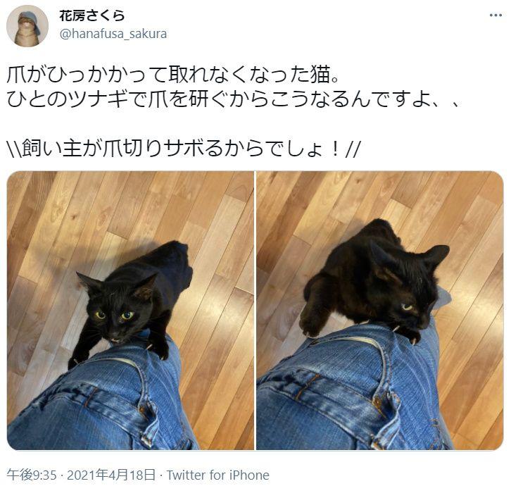 飼い主のツナギで爪を研ぐ猫さん 爪がひっかかってしまいガビーン