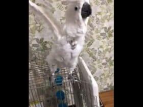 「絶対寝たくないでござる!」愛鳥の「抗議動画」がTwitterで反響。