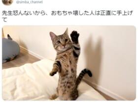 自らの悪事を素直に認めた猫の姿がTwitterで反響。