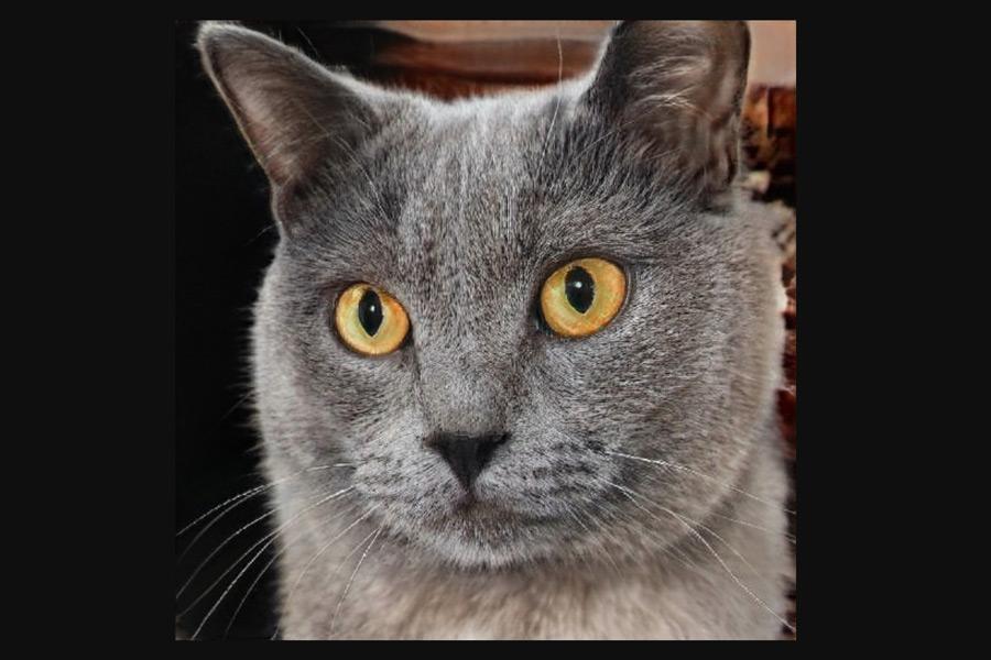 模様のない猫の画像も